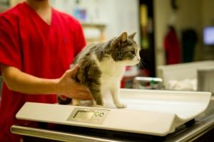Fremont Kitty