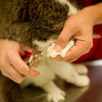 Kitty Nail Trim