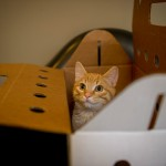 Kitty in Box, cropped square